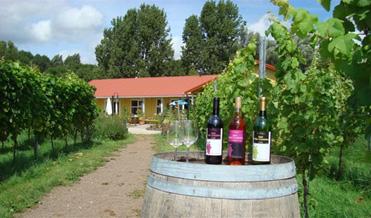 wijngaard-amsteltuin2