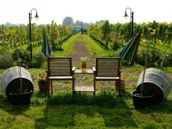 wijngaard-de-amsteltuin-4