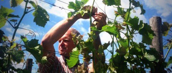 wijnspijsavond-wijngaard